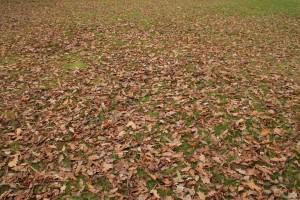 Los beneficios de 3 deportes para practicar con niños en otoño