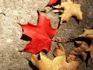 Consejos para disfrutar de 3 deportes para practicar con niños en otoño