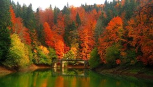 Mejores bosques de España para Pasear